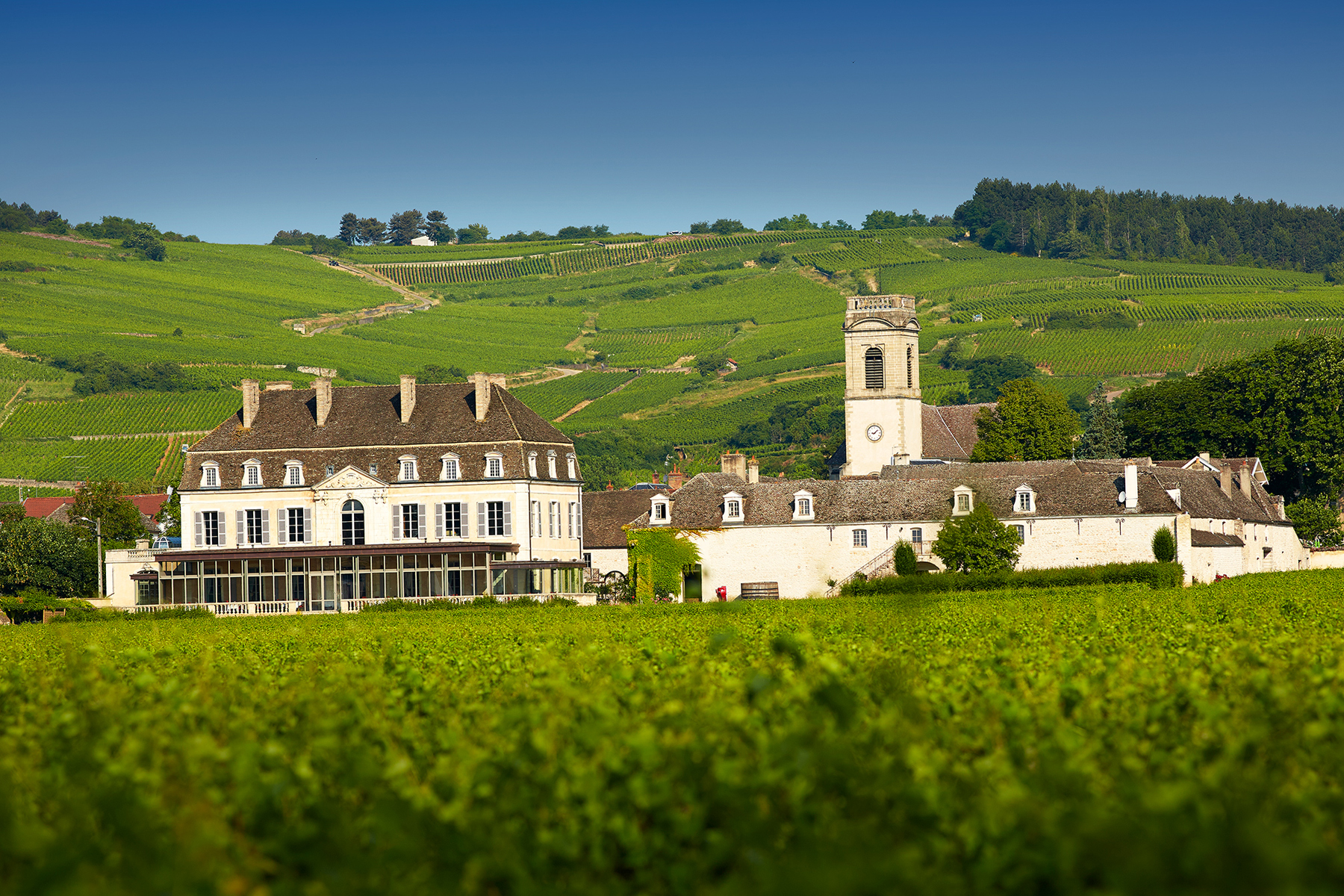 Vineyard and Heritage near Hotel